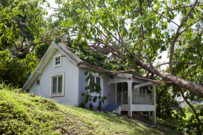 insurance for fallen tree