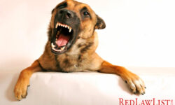 Be Proactive In Preventing Dog Bites